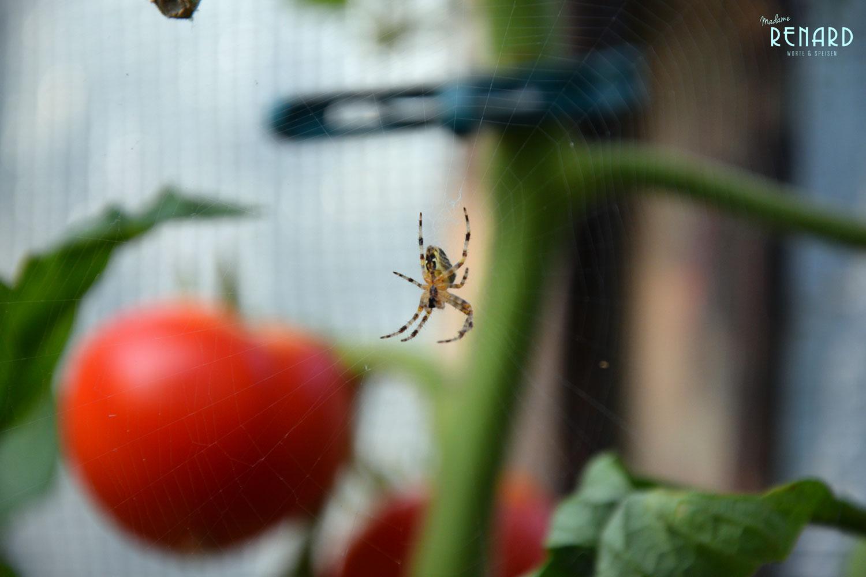 Tomaten, Foto: Madame Renard