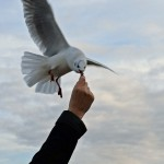 Futter für die Seele: Winterausflug auf die Insel Poel